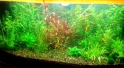 Удобрения( УДО микро,  макро,  калий,  железо ) для аквариумных растений.