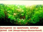 Удобрения(УДО микро,  макро,  калий,  железо) --для аквариумных растений.