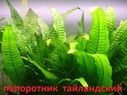 Папоротник тайландский и др. растения - НАБОРЫ растений для запуска.