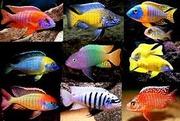 Аквариумная рыба. Всякая - разная --- супер дешево.