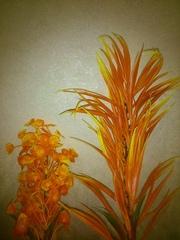 Яркие растения для вашего аквариума