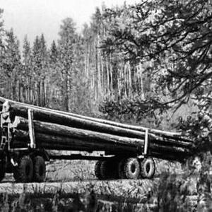 Зимний лес Сибири кедр лиственница сосна ангарская