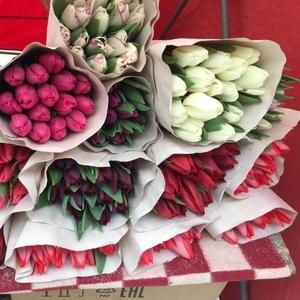 Белорусские тюльпаны оптом