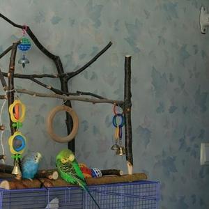 Игровые комплексы, присады, стенды для попугаев разных видов.Отправка.