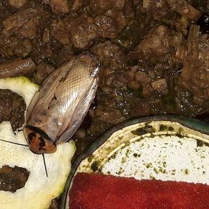 Тараканы Оранжевоголовые.Скидки от колличества