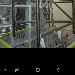 Изготовление аксессуаров, стендов, присад, комплексов для птиц