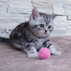 Кошечка /котенок.
