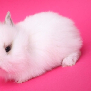 Декоративные кролики Беларусь