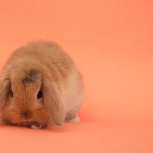 Кролики разных видов и породы