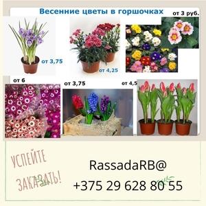 Цветы весенние для организаций на 8 марта