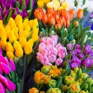 Тюльпаны оптом,  Зарабатывайте на продаже тюльпанов 8 марта.