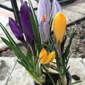 Горшочные растения к 8 марта оптом и в розницу