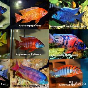 Экзотические рыбки/большой выбор.