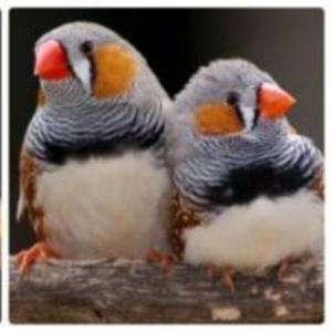 Птицы.Гостиница, передержка экзотических птиц
