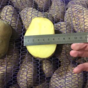 Реализуем картофель сетевого качества