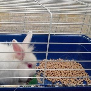 Белый декоративный кролик БЕСПЛАТНО